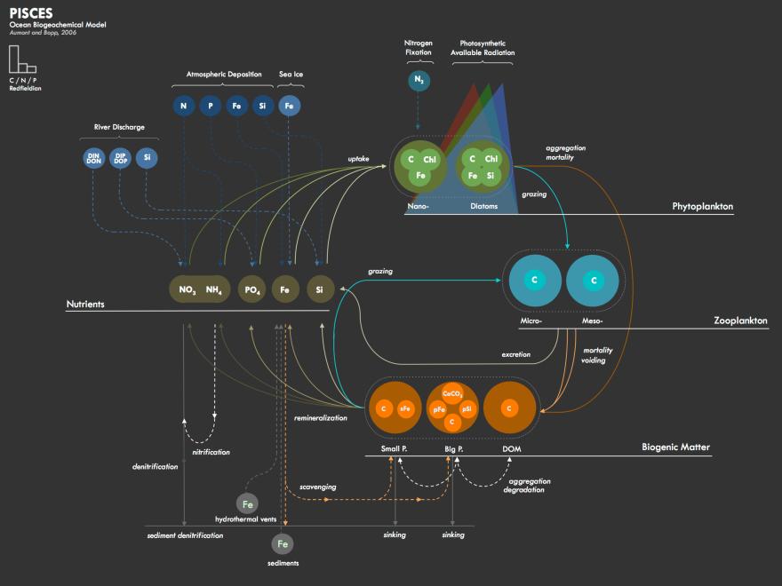 PISCES_model_WEB